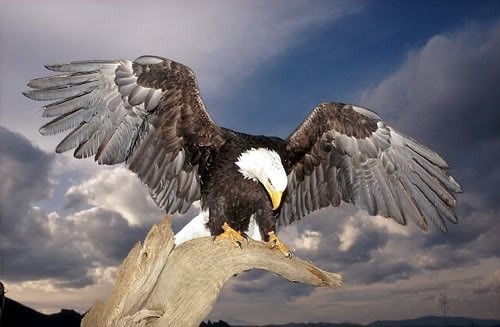 great_eagle